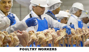 poultry-worker-copy